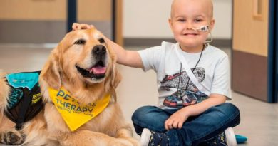Therapy dogs are most commonly used in Animal Assisted Therapy
